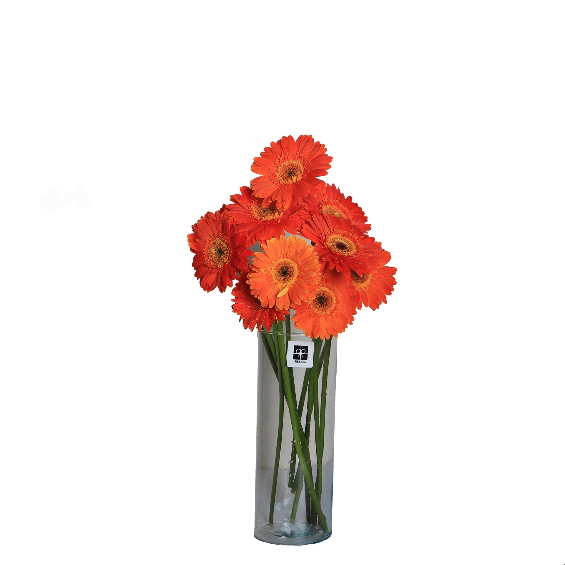 گل ژربرا نارنجی